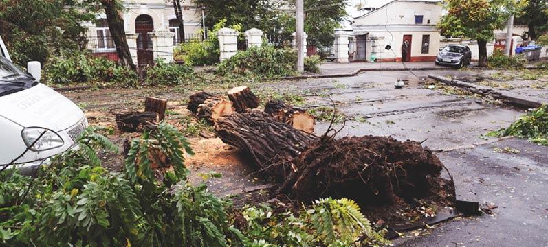 Tree Service Removal Company