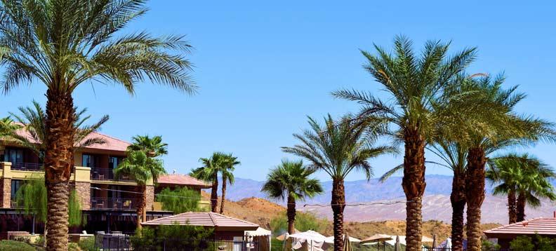 Best Palm Tree Service