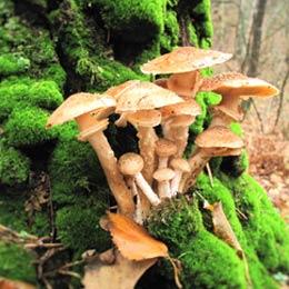 Fungi Mushroom